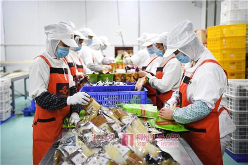 在阳和工业园区一家螺蛳粉企业生产车间,工人们在生产线上忙碌着.jpg