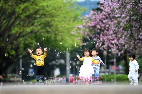 人民广场,小朋友在紫荆花下玩耍.jpg
