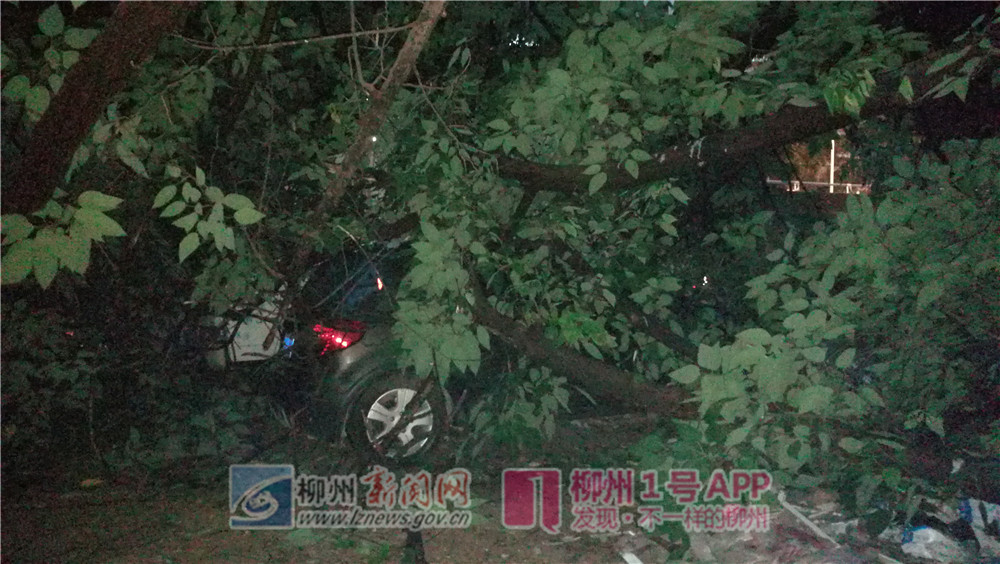 約5層樓高大樹倒塌壓壞2輛車!事發永前路一廢棄工地